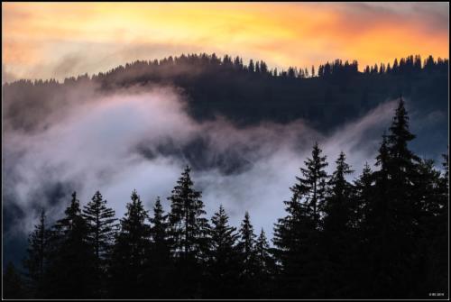 Baumsilouhetten im Sonnenuntergang