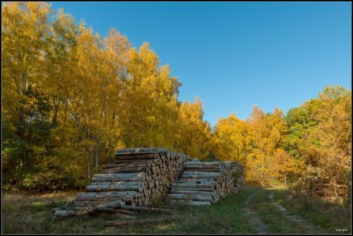 Herbstlicher Lagerplatz