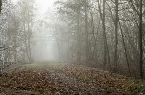 Weg im Nebel II