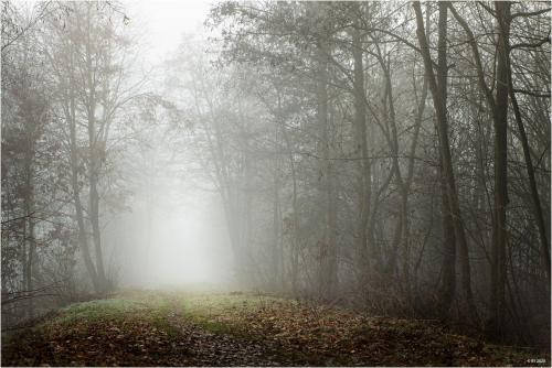 Weg im Nebel III